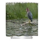Green Heron In Water Shower Curtain