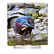 Green Heron Male Shower Curtain