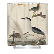 Green Heron, Night Heron, Young Heron, And Great White Heron Shower Curtain