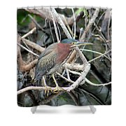 Green Heron On A Branch Shower Curtain