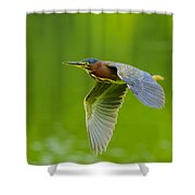 Green Heron On The Downdraft Shower Curtain