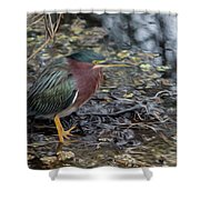 Green Heron Patience Shower Curtain