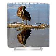 Green Heron Preening Shower Curtain