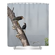 Green Herons At The Water Cooler Shower Curtain
