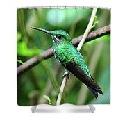 Green Crowned Brilliant Hummingbird Shower Curtain