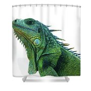 Green Iguana 1 Shower Curtain