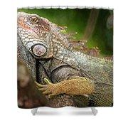 Green Iguana Costa Rica Shower Curtain