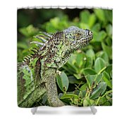 Green Iguana Vertical Shower Curtain