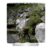 Green In Rock Garden Shower Curtain