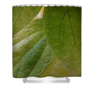 Green In Vein Shower Curtain