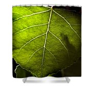 Green Leaf Detail Shower Curtain