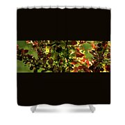 Green Leaf Red Leaf Pano Shower Curtain