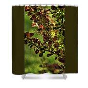 Green Leaf Spotlight Shower Curtain