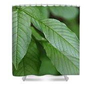 Green Leafs Shower Curtain