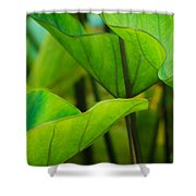 Green Leaves At Cantigny Shower Curtain