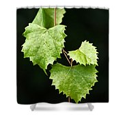 Green Leaves Shower Curtain