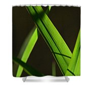Green Leaves In Sunlight Shower Curtain