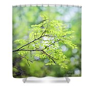 Green Leaves In The Forest Shower Curtain