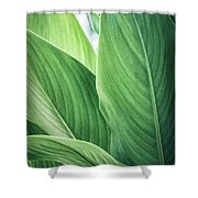 Green Leaves No. 2 Shower Curtain by Todd Blanchard