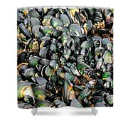 Green Lipped Muscles Shower Curtain