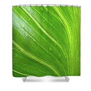 Green Living Shower Curtain