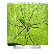Green Lynx Spider Shower Curtain