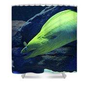 Green Moray Eel Shower Curtain
