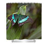 Green Moss Peacock Butterfly Shower Curtain