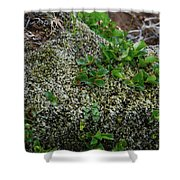 Green On Rocks Shower Curtain
