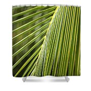 Green Palm Leaf Shower Curtain