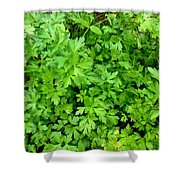 Green Parsley 1 Shower Curtain