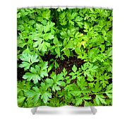 Green Parsley 2 Shower Curtain