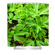 Green Parsley  4 Shower Curtain