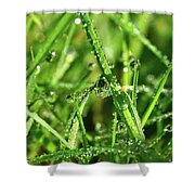 Green Rain Shower Curtain