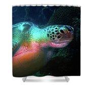 Green Sea Turtle 1 Shower Curtain