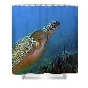 Green Sea Turtle 4 Shower Curtain