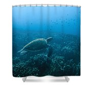 Green Sea Turtle Swimming Over Coral Shower Curtain