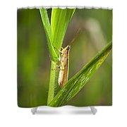 Green Slantfaced Grasshopper Shower Curtain