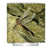 Green Spotted Dragonfly 1 Shower Curtain