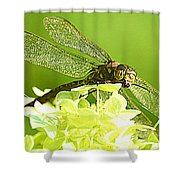 Green Spotted Dragonfly 2 Shower Curtain