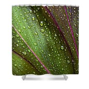 Green Ti Leaves Shower Curtain