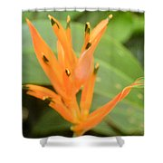 Green Tipped Shower Curtain