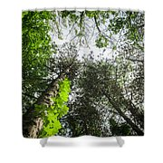 Green To The Sky Shower Curtain