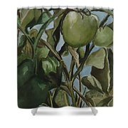 Green Tomatoes On The Vine Shower Curtain