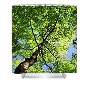 Summer Tree Canopy Shower Curtain