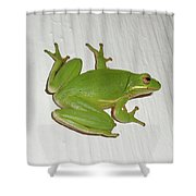 Green Tree Frog - Hyla Cinerea Shower Curtain