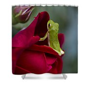 Green Tree Frog And Red Roses Shower Curtain