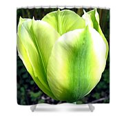Green Tulip Shower Curtain