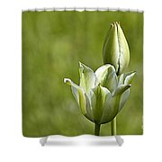 Green Tulips Shower Curtain