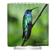 Green Violet Ear Hummingbird Shower Curtain